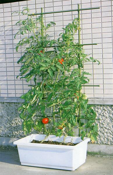 元気な植物をじっくり育てる