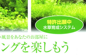 特許出願中ー水草育成システム