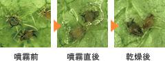 アースガーデン あめんこ 食品成分で野菜と花の虫と病気退治
