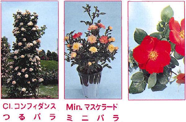 バラ作りの決め手となる酵素を配合した専用肥料!