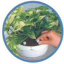 置くだけの肥料で簡単!プロミック!いろいろな植物用・臭いがないので室内でも使用するのに安心!