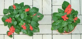 ビタミン類・高純度天然糖質配合により、植物に活力を与えます