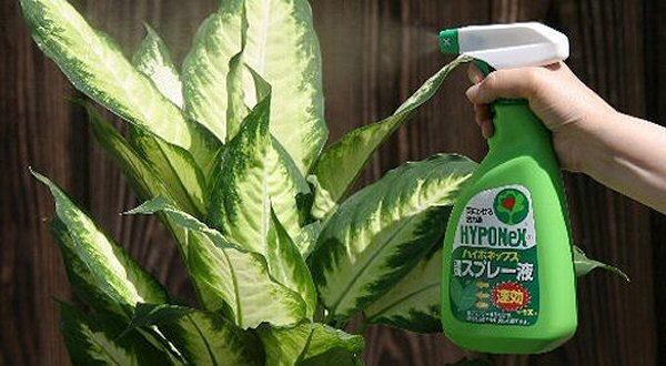 観葉植物・カロイドカルチャーにおすすめ!・葉にかける活力液・ガーデニング・ハイポネックス速効スプレー液