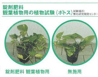 かわいいハート型肥料・錠剤肥料観葉植物用:錠剤はかわいいハート型