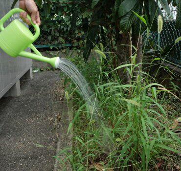 植物性除草剤