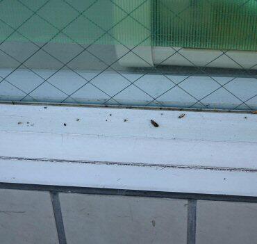 窓ガラスの虫よけ