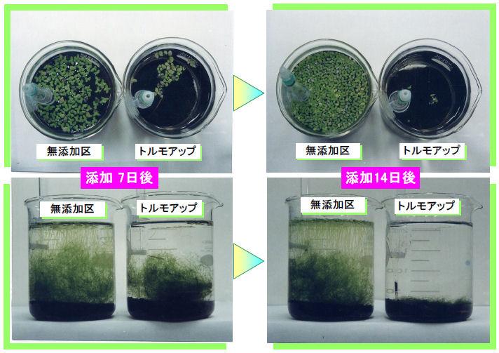 三明ケミカル株式会社 除藻剤 トルモアップ