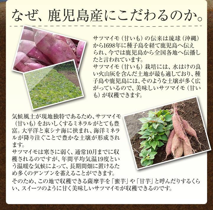 生芋紅はるか説明1-6