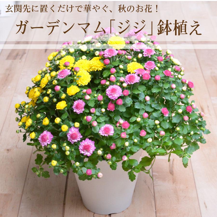 Fleur Town 吉本花城園