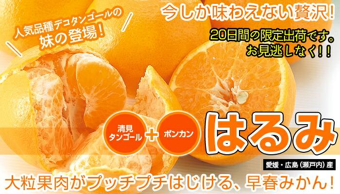 柑橘 はるみ はるみ・柑橘のことなら「みかんな図鑑」|伊藤農園