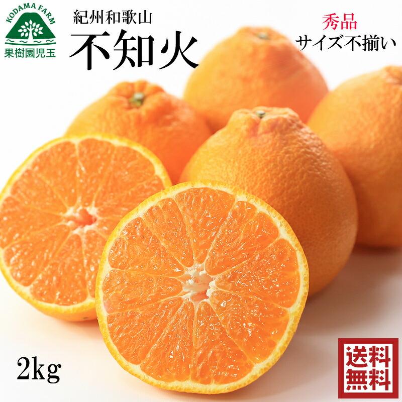 【送料無料(送料込)】【お歳暮】紀州和歌山のみかん10kg