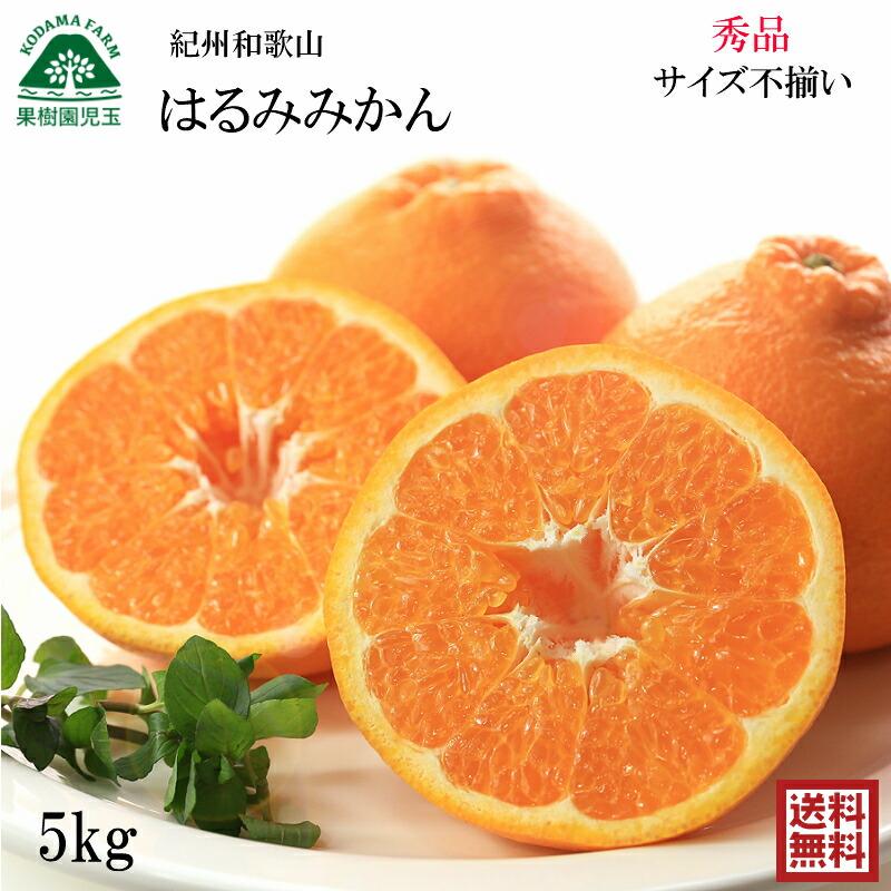 【お試し!家庭用送料無料】紀州和歌山のみかん5kg