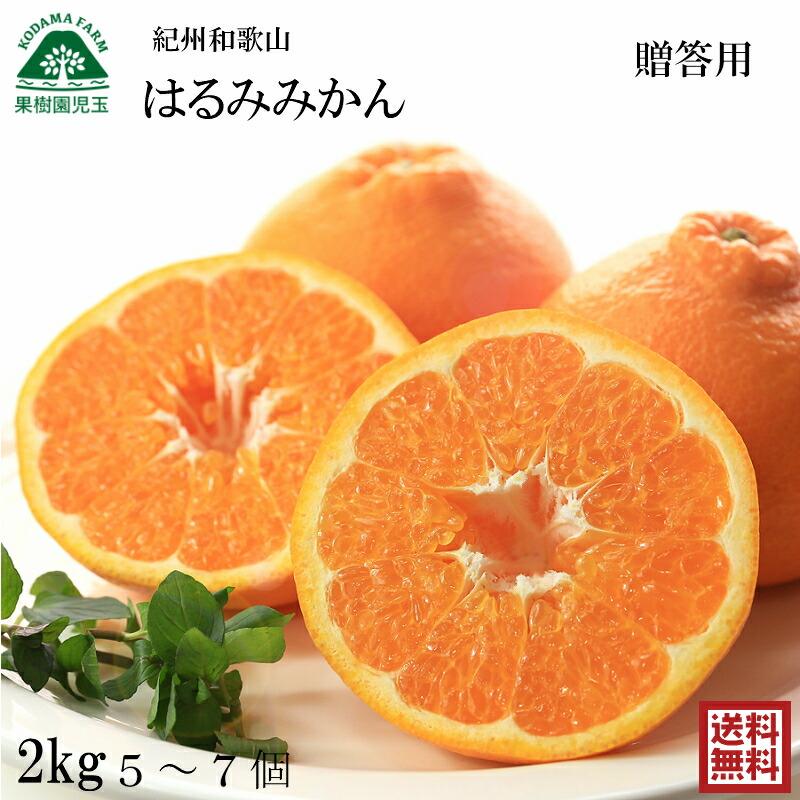 【送料無料(送料込)】【お歳暮】紀州和歌山のみかん5kg