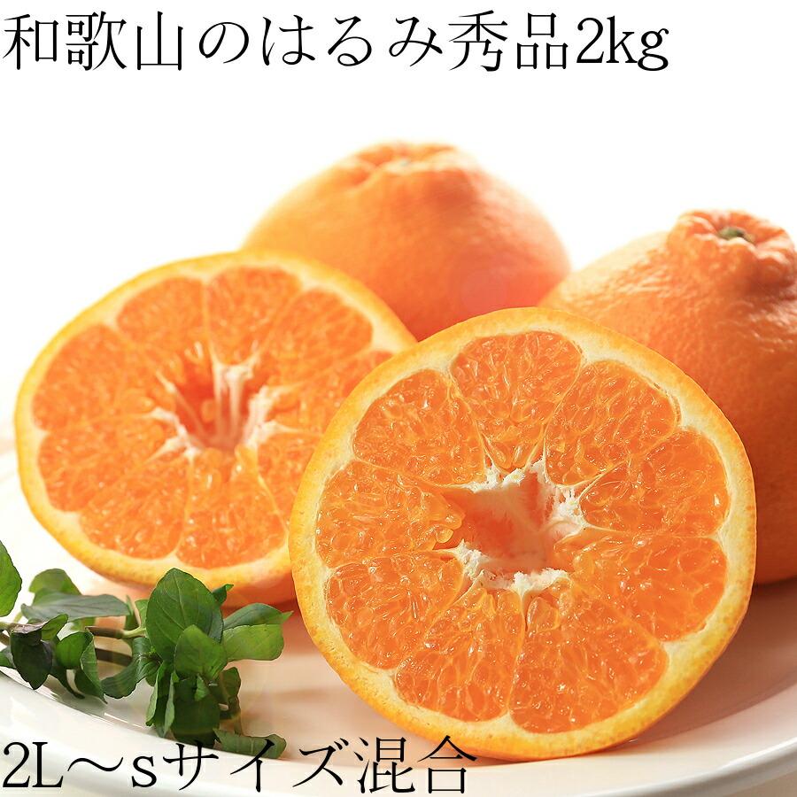 【予約販売】【送料無料】和歌山のはるみ 秀品2L〜Sサイズ混合 2kg 10〜14個