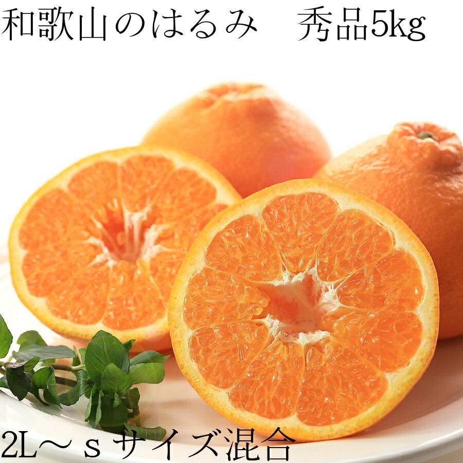 【送料無料】和歌山のはるみ 秀品2L〜Sサイズ混合 5kg 25〜35個