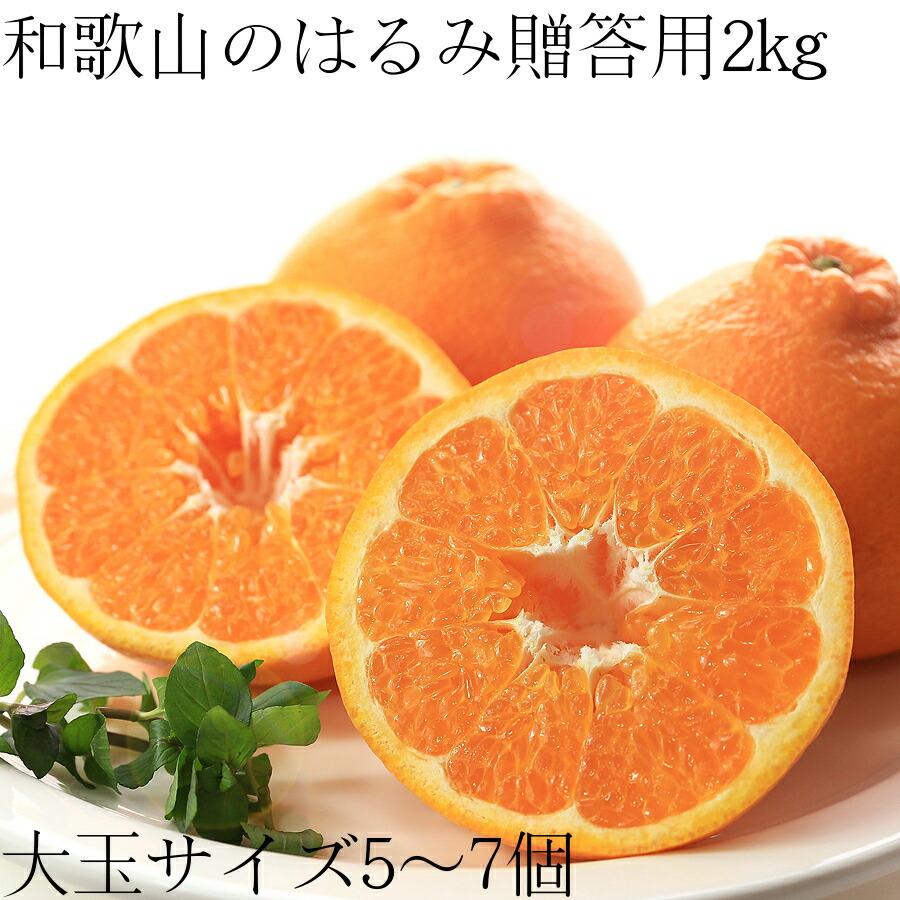【送料無料】和歌山のはるみ 贈答用2kg 大玉5〜7玉