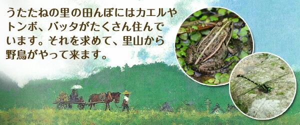 うたたねの里の田んぼにはカエルやトンボ、バッタがたくさん住んでいます。それを求めて、里山から野鳥がやって来ます。