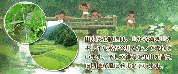 田んぼの脇には、山から湧き出すキレイな谷川となって流れています。そして、緑深い里山を背景に稲穂が風にそよいでいます。