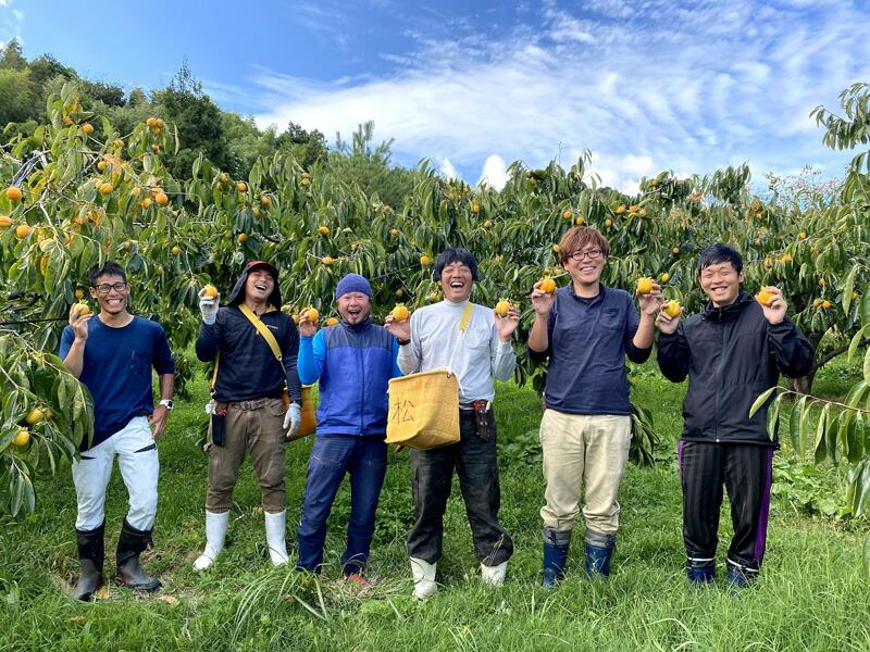 西条柿の木