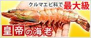 皇帝の海老シータイガー