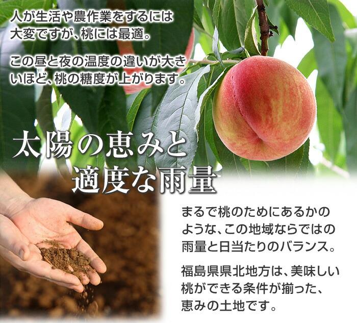 福島県県北地方は、気候が厳しく、特に寒暖の差が激しい地域です。人が生活や農作業をするには大変ですが、桃には最適。この昼と夜の温度の違いが大きいほど、桃の糖度が上がります。まるで桃のためにあるかのような、この地域ならではの雨量と日当たりのバランス。福島県県北地方は、美味しい桃ができる条件が揃った、恵みの土地です。
