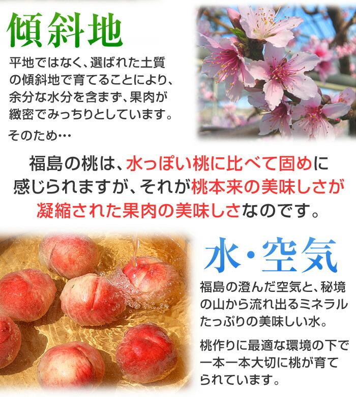 平地ではなく、選ばれた土質の傾斜地で育てることにより、余分な水分を含まず、果肉が緻密でみっちりとしています。そのため福島の桃は、水っぽい桃に比べて固めに感じられますが、それが、桃本来の美味しさが凝縮された果肉の美味しさなのです。福島の澄んだ空気と、秘境の山から流れ出るミネラルたっぷりの美味しい水。桃作りに最適な環境の下で、一本一本大切に桃が育てられています。
