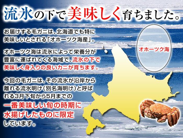 お届けする毛ガニは、北海道でも特に美味しいとされる「オホーツク海産」。オホーツク海は流氷によって栄養分が豊富に運ばれてくる海域で、流氷の下で美味しく身入りの良いカニが育ちます。今回の毛ガニは、その流氷が沿岸から離れる流氷明け(別名海明け)と呼ばれる3月下旬から5月までの一番美味しい旬の時期に水揚げしたものに限定しています。