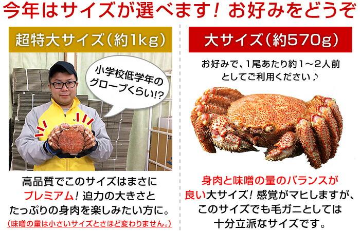 今年はサイズが選べます!お好みをどうぞ♪超特大サイズ(約1kg)は高品質でこのサイズはまさにプレミアム!迫力の大きさとたっぷりの身肉を楽しみたい方に(味噌の量は小さいサイズとさほど変わりません。)大サイズ(約570g)は身肉と味噌の量のバランスが良い大サイズ!感覚がマヒしますが、このサイズでも毛ガニとしては十分立派なサイズです。