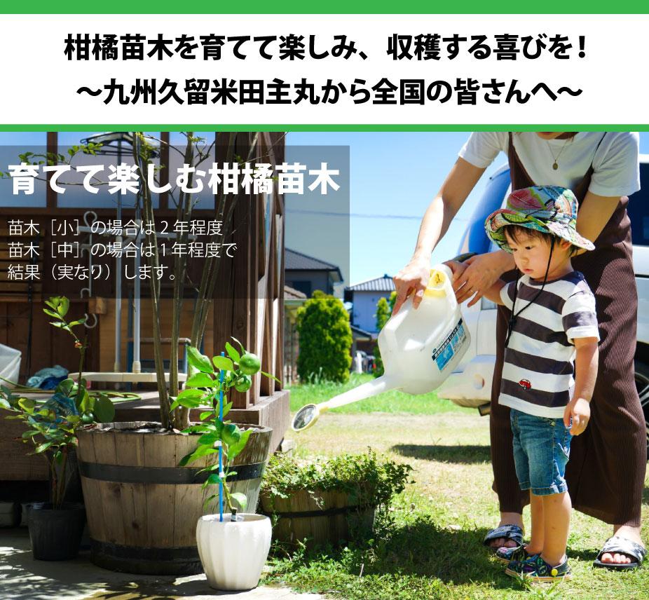 かみはる園芸2021年夏編