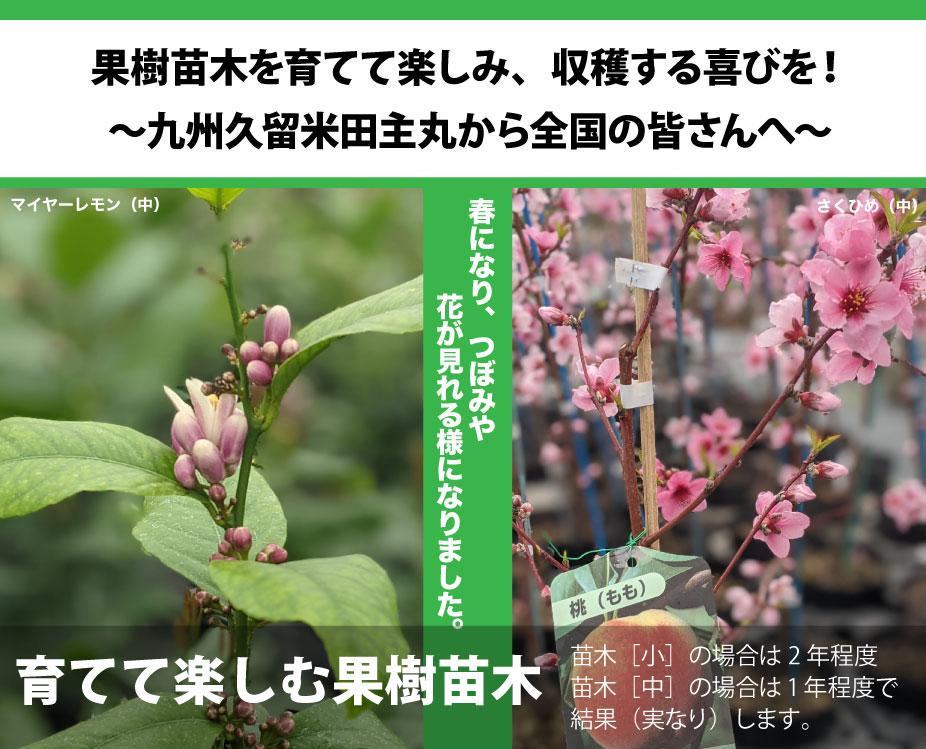 かみはる園芸2021年春編