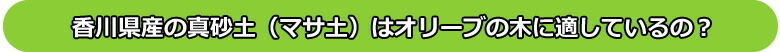 香川県産の真砂土(マサ土)はオリーブの木に適しているの?