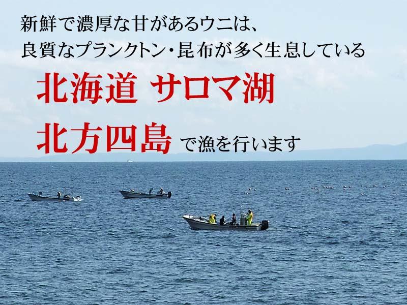 うにの産地、北海道サロマ・北方四島