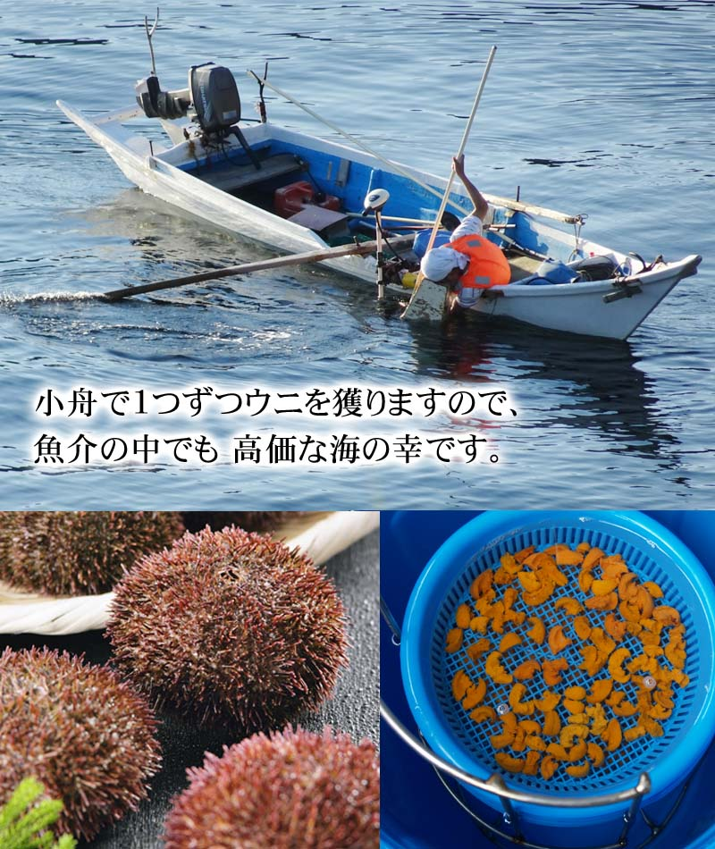 ウニ漁の様子
