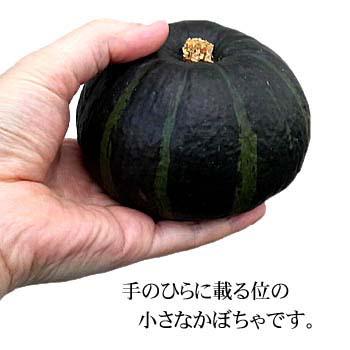 坊ちゃんかぼちゃの大きさ