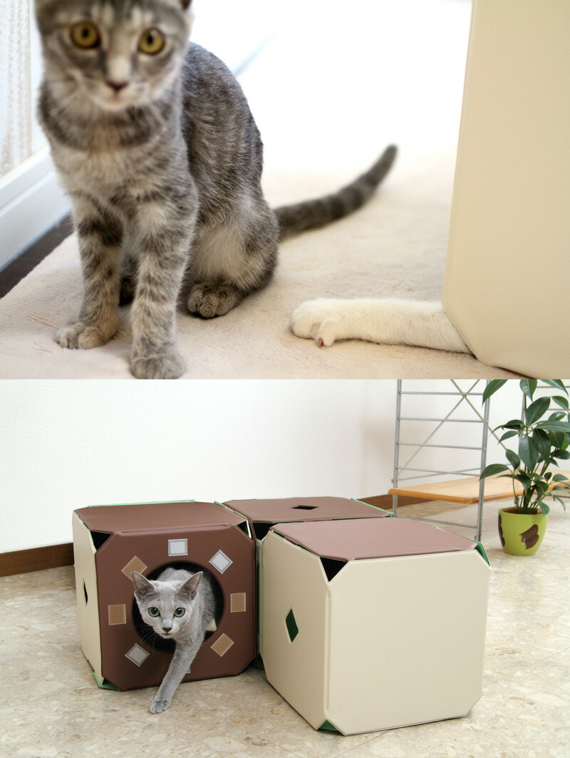 猫ジム [キャットタワー キャットトンネル キャットハウス 据え置き おしゃれ ランド]