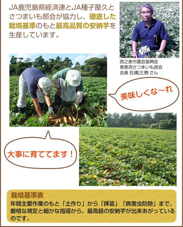 熟成させてから出荷、甘みが強い安納芋の生産にこだわっています