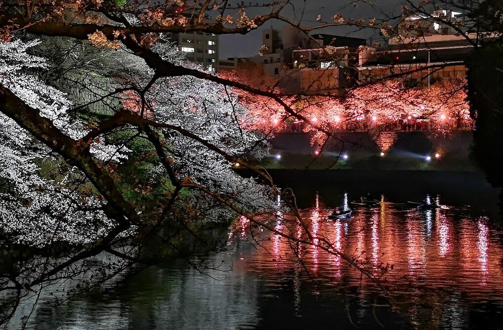 千鳥ヶ淵でお花見 桜の名所