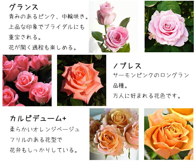河田ばら園で育てているバラです02