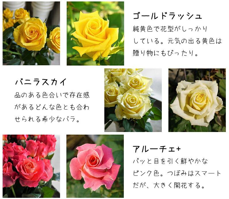 河田ばら園で育てているバラです03