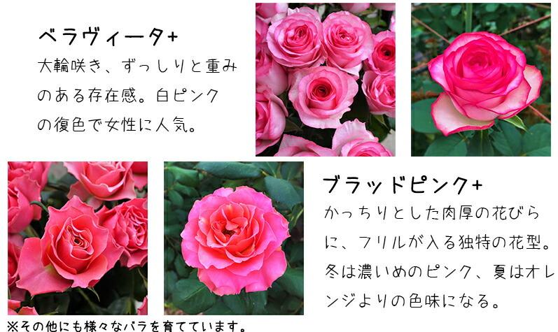 河田ばら園で育てているバラです04