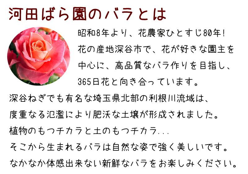 河田ばら園のバラとは