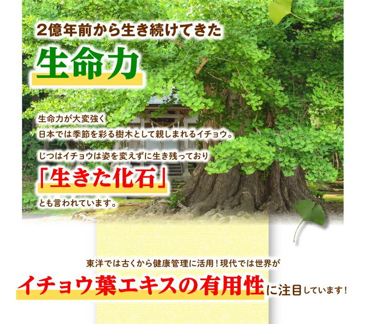 2億年前から生き続けてきた生命力生命力が大変強く日本では季節を彩る樹木として親しまれるイチョウじつはイチョウは姿を変えずに生き残っており「生きた化石」とも言われています。