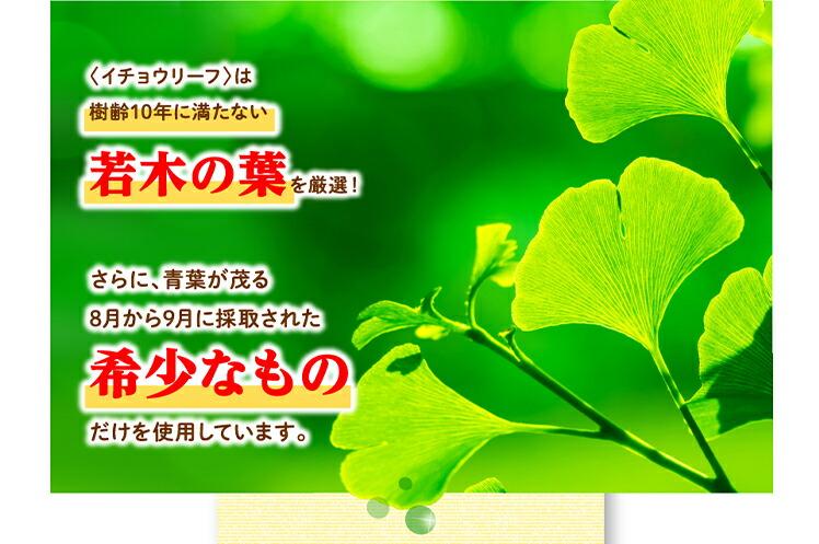 <イチョウリーフ>は農薬を使わずに栽培された樹齢10年に満たない若木の葉を厳選!さらに、青葉が茂る8月から9月に採取された希少なものだけを使用しています。