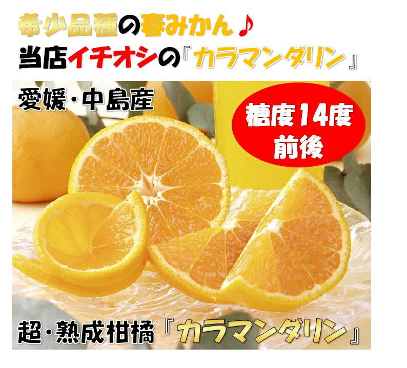 みかん愛媛みかん中島みかんせとか国産レモン