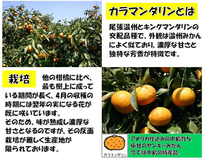温州みかんキングマンダリン熟成濃厚な甘さ中島特産品