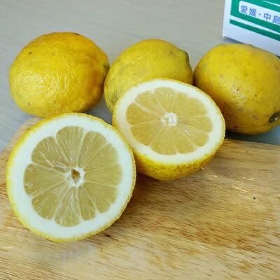 レモン 国産