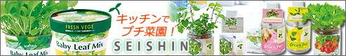 聖新陶芸 SEISHIN キッチン菜園
