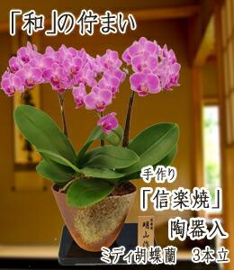 ミディ胡蝶蘭3本立信楽焼陶器入 12,000円