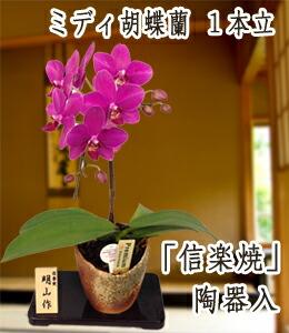 ミディ胡蝶蘭1本立ち信楽焼陶器入6,500円