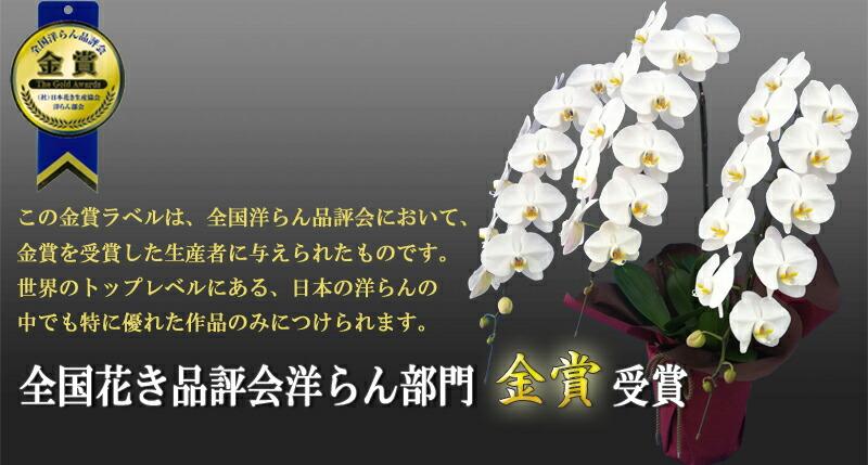 全国花き品評会洋蘭部門金賞受賞
